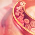 健康寿命を延ばすために知っておきたい「血管の内皮細胞」を傷つける4つの原因とその予防について